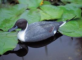 Canard Pilet mâle décoratif de bassin à poser