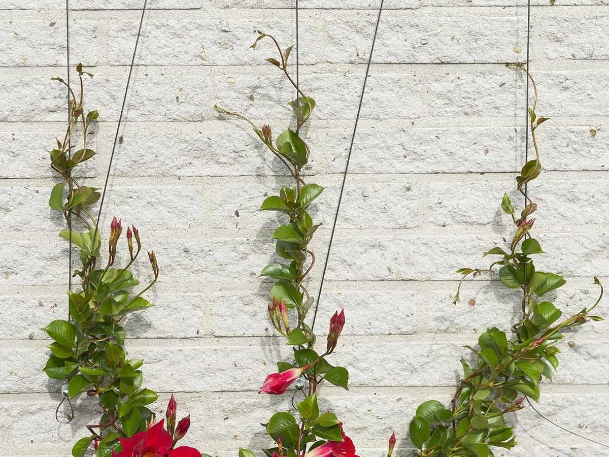 Fabriquer Treillis Bois Pour Plantes Grimpantes treillis invisible personnalisable